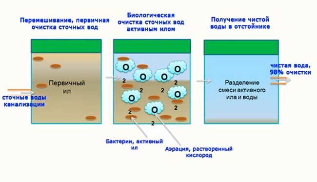 Правила использования бактерий для септика