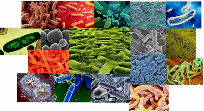 Разновидности бактерий для септиков