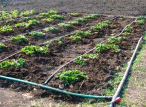 Пластиковый водовод для растений