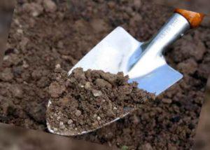 -недостаточное увлажнение почвы.